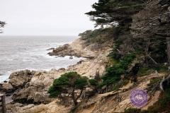 Monterey-coastline
