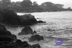 Monterey-sea-shore